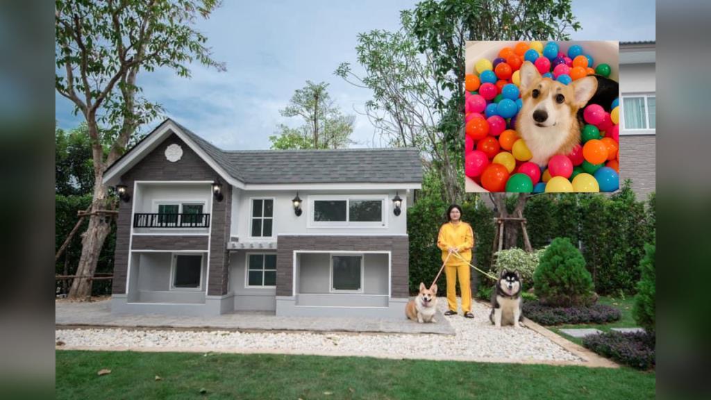 """สาวรับสมัคร """"พี่เลี้ยงหมาคอกี้เพิ่งคลอด"""" ระบุชัดต้องนอนกับหมา โชว์บ้านพักส่วนตัวน้องหมาสุดอลัง!"""