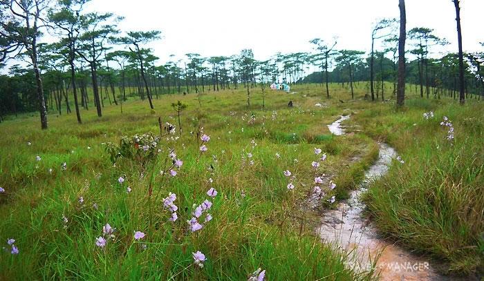 เส้นทางเดินศึกษาธรรมชาติบนลานสวนภูสอยดาว