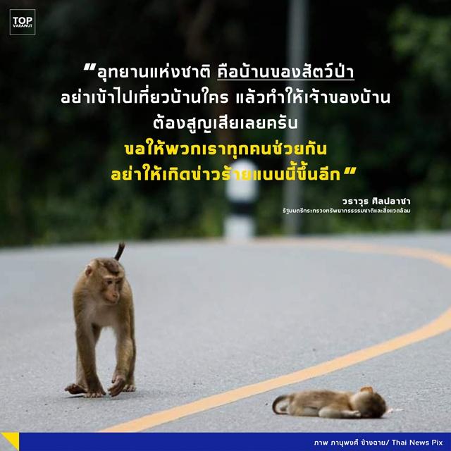 'กรณีลูกลิงกังถูกรถยนต์ชน' วราวุธ ขอร้อง! อุทยานแห่งชาติ คือบ้านของสัตว์ป่า