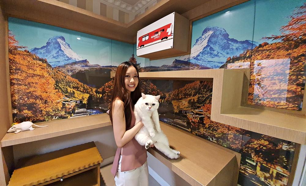 """(ชมคลิป) เหมือนพาน้องแมวไปเที่ยว! """"Neko Luxury Cat Hotel"""" ห้องพักหลากสไตล์ไม่จำเจ ตอบโจทย์เหล่าทาสแมว ฝากทูลหัวนานแค่ไหนก็หายห่วง"""