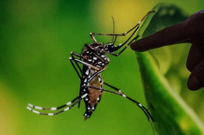 ไขข้อเท็จจริง : 'ยุง-แมลงวัน' แพร่เชื้อไวรัส 'โควิด-19' ได้หรือไม่?