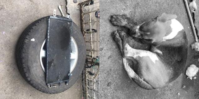 ใจอำมหิต! โจรแอบปืนเข้าบ้านคนอื่น ทุบตี-มัดขาสุนัขจนเสียชีวิต แถมยังอำพรางศพด้วยวิธีสุดโหด