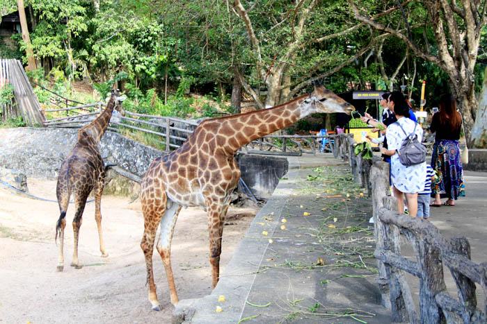 คนแห่เที่ยว สวนสัตว์เขาเขียวเต็ม ปิดรับวอล์คอิน