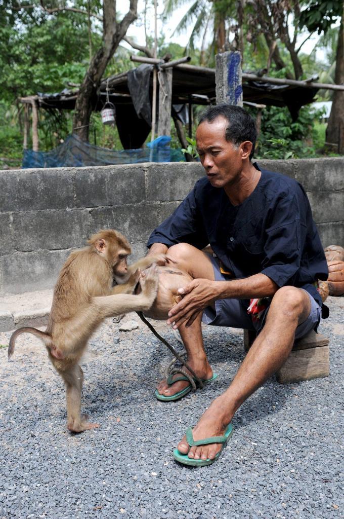 ศูนย์ฝึกลิงเพื่อการเกษตรกระแดะแจะ  ภาพจากเพจ ททท.สุราษฎร์ธานี