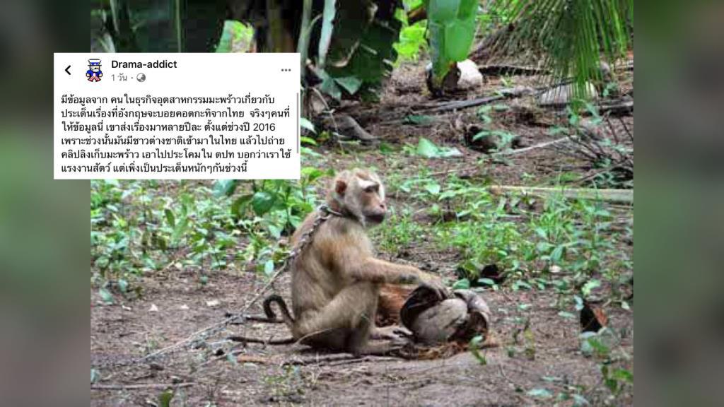 """เพจดังชี้! ต่างชาติ """"แบนกะทิไทย"""" เหตุผลไม่ใช่เพราะลิงเก็บมะพร้าว อาจเป็นเรื่องเศรษฐกิจ"""