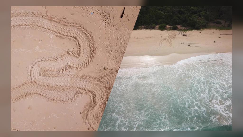 อุทยานอวดภาพ! ความสวยงามในการวางไข่ของแม่เต่าทะเล ชาวเน็ตชี้คล้ายรอยพญานาค