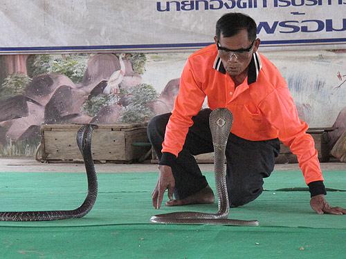 เชิญมาชมการแสดงอันน่าตื่นเต้นได้ที่หมู่บ้านงูจงอางบ้านโคกสง่า (ภาพ: การท่องเที่ยวแห่งประเทศไทย สำนักงานจังหวัดขอนแก่น)