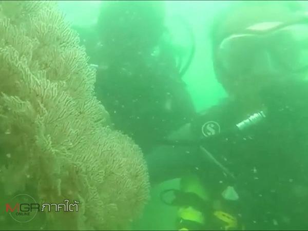 นักอนุรักษ์ลงสำรวจแนวปะการังเกาะหนู-เกาะแมว พบมีสภาพเสื่อมโทรมอย่างหนัก