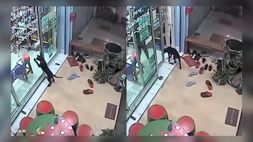 ไวรัลคลิป! ลูกสุนัขพันธุ์ไทยหลังอานแสนรู้ พลัดหลงเจ้าของ ไปขอความช่วยเหลือคลินิกรักษาสัตว์ที่เคยไป (ชมคลิป)