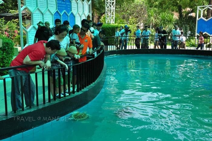 ศูนย์อนุรักษ์พันธุ์เต่าทะเล ได้รับตรามาตรฐาน SHA