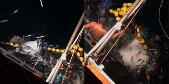 ประมงภูเก็ต ช่วยปลากระเบนปีศาจตินอวนกว่า 10 ตัว กลับสู่ทะเลอย่างปลอดภัย