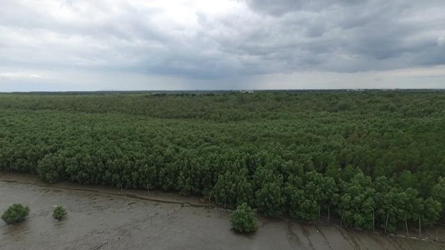 วันนี้ ผืนป่าบริเวณนี้มีต้นแสมขึ้นเขียวครึ้มเต็มพื้นที่