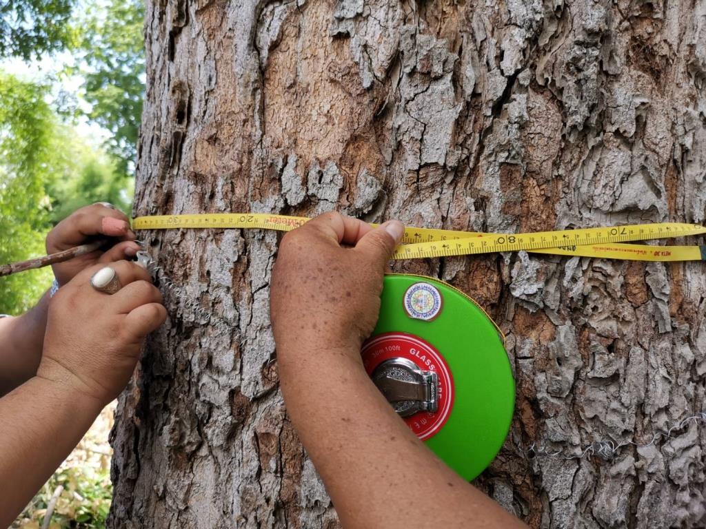 กรมพัฒน์ฯ จับมือ ธ.ก.ส. ดันเกษตรกรปลูกไม้ยืนต้นในที่ดินตนเอง ก่อนใช้ค้ำประกันกู้เงิน