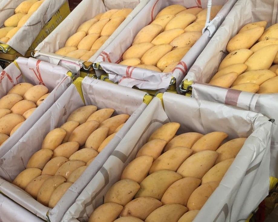 อาเซียน-จีน-ฮ่องกงนิยมมะม่วงไทย เอฟทีเอช่วยหนุนส่งออก 5 เดือนเพิ่ม 4%