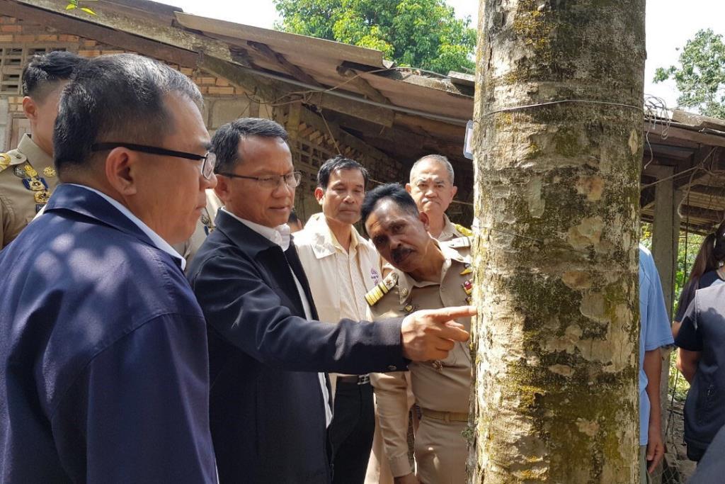"""นำร่องปลูก """"พืชกระท่อม"""" 135 หมู่บ้าน เน้นใช้ตามวิถีชุมชน-ไม่ผิดวัตุประสงค์"""