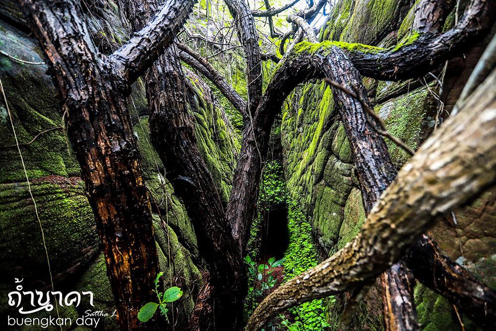 มุมป่าโบราณ (ภาพ : เพจ Buengkan day)