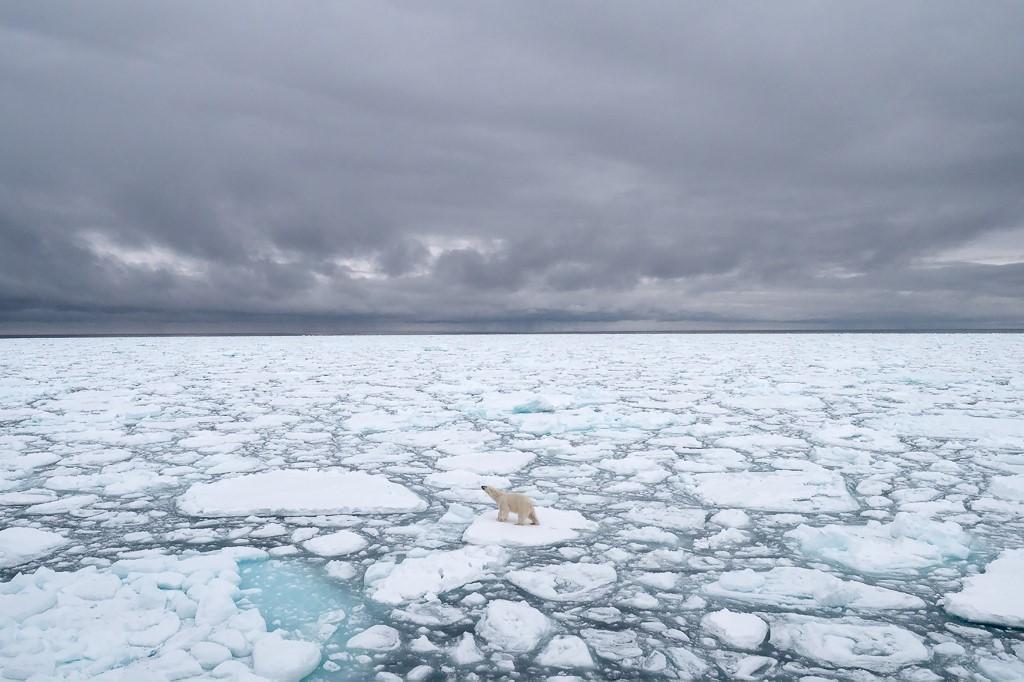 น้ำแข็งที่ละลายจากภาวะโลกร้อนทำให้ถิ่นอาศัยของหมีขาวลดลง และยังหาอาหารได้น้อยลง (BJ KIRSCHHOFFER / POLAR BEARS INTERNATIONAL / AFP)