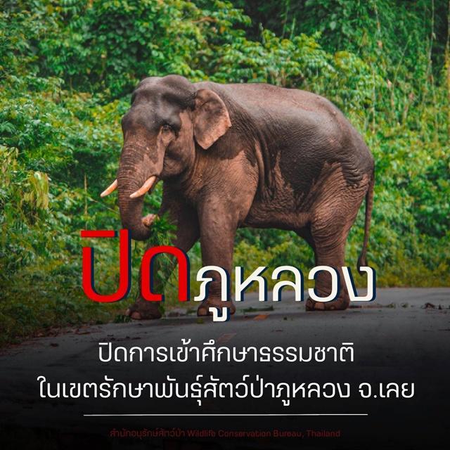 ปิดภูหลวง! จนถึง 31 ต.ค.63 หวั่นอันตรายเส้นทางหน้าฝน ช้างป่าออกนอกพื้นที่