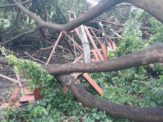 พายุพัดกระหน่ำเมืองชัยนาท ทำต้นไม้ขนาดใหญ่ หักโค่นกีดขวางถนน