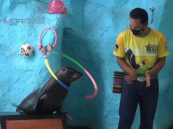 ท่องเที่ยวสวนสัตว์สงขลาคึกคักช่วงวันหยุดยาว ชมแมวน้ำแสนรู้โชว์ความสามารถสุดทึ่ง