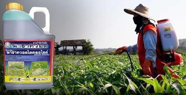 สมาคมเกษตรฯ ร้องนายกฯ ทบทวบเลิกพาราควอต หลังไร้มาตรการรองรับ