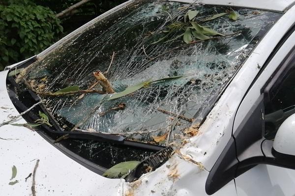 เฉียดตาย! ต้นกระถิ่นยักษ์ล้มทับรถผู้ใหญ่บ้าน โชคดีเจ็บเล็กน้อย