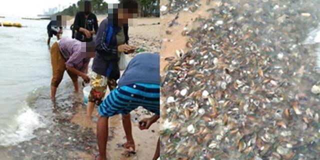 """""""ดร.ธรณ์"""" เผย """"หอยแมลงภู่"""" เกลื่อนหาดจอมเทียน เกิดได้หลายสาเหตุ ปัด เป็นสัญญานเกิดเหตุภัยพิบัติ"""