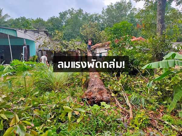 พายุพัดถล่มต้นไม้หัก-เสาไฟฟ้าล้มทับบ้านเสียหายหนักในหลายพื้นที่ของ จ.ตรัง
