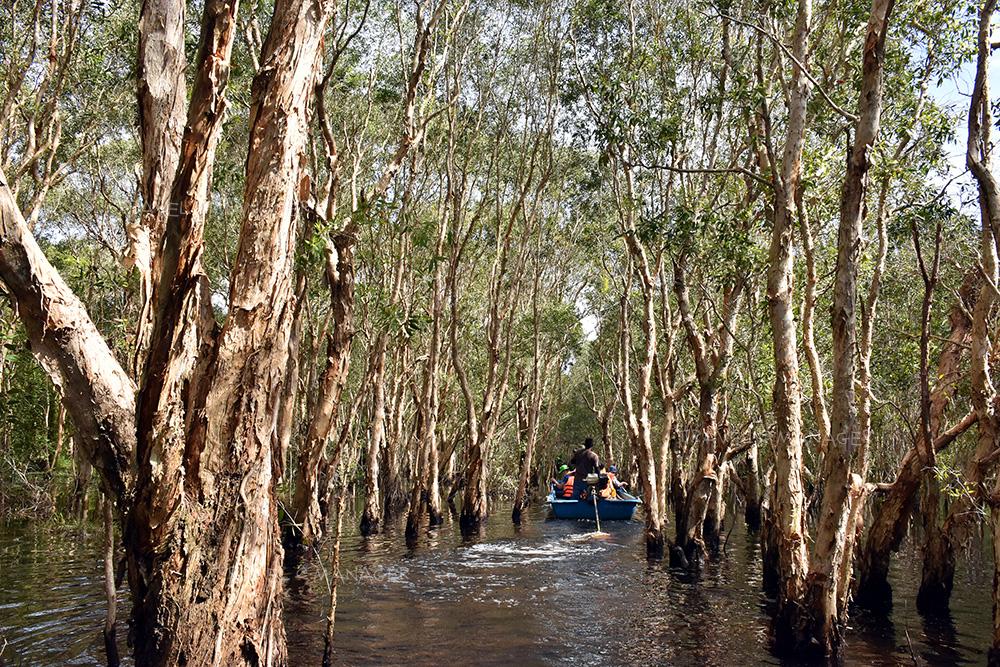 นั่งเรือชมป่าเสม็ดต้นเก่าแก่