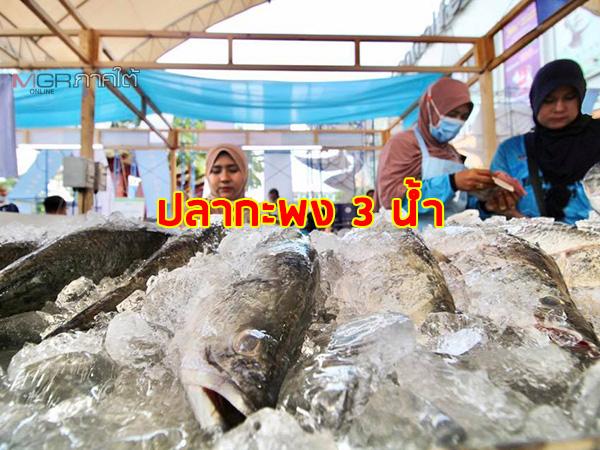 """ก.พาณิชย์ผนึกกำลังภาคีเครือข่าย เปิดงาน """"เที่ยวสงขลา กินปลากะพง 3 น้ำ Seafood Festival"""""""