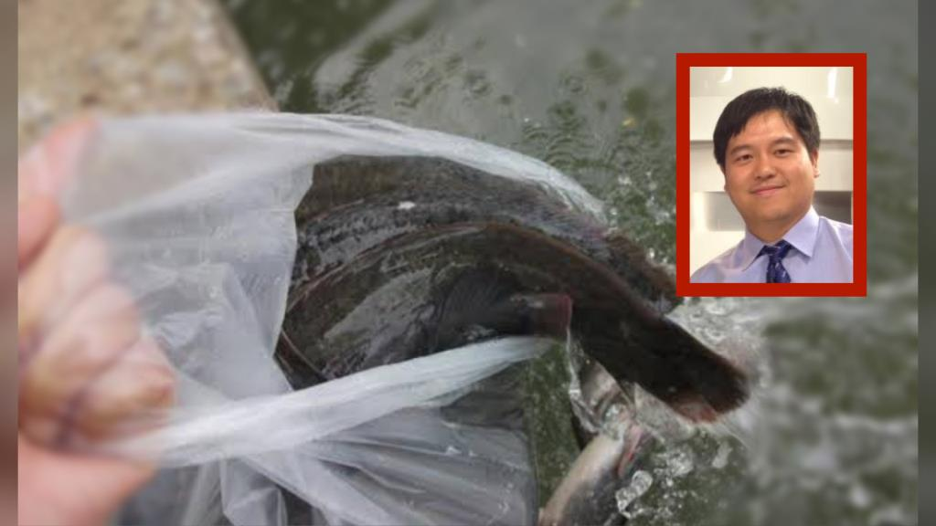 """ดร.นณณ์ วอนอย่าปล่อย """"ปลาดุก"""" ทำบุญ ชี้ ปลาดุก 1 ตัน สามารถกินสัตว์น้ำได้ถึง  1,800,000 ตัวต่อปี"""