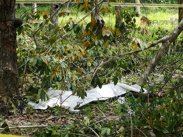 สุดเศร้า! พบศพหนุ่มห้วยยอดถูกไม้ทิ่มหน้าดับกลางสวนยางพารา