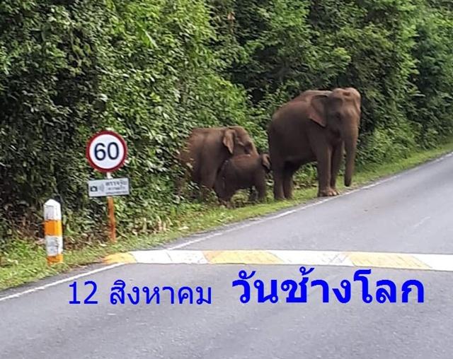 """12 สิงหาคม """"วันช้างโลก"""" (World Elephant Day)"""