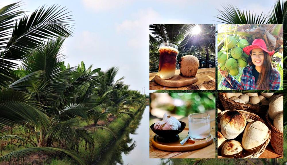 """""""Coco cowbow"""" ปรับสวนเป็นที่เที่ยว เปลี่ยนมะพร้าวเป็นเมนูอร่อย สร้างจุดขายเพิ่มมูลค่างาม"""