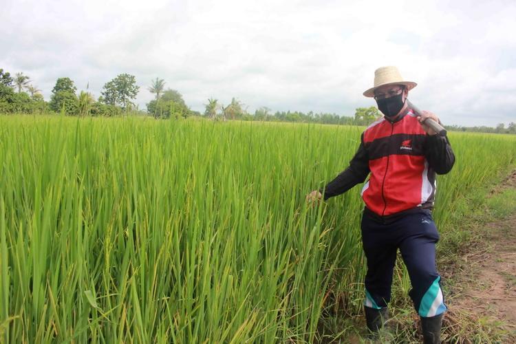 ชาวนาย้ำจนท.รัฐต้องเข้มงวดชายแดนสกัดลอบนำเข้าข้าวตีตลาดในไทย