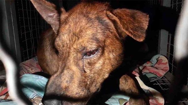 โหด!ครูสระแก้ว แจ้ง ตร.ช่วยสุนัขถูกคนใจร้ายทำร้ายปางตายซ้ำจับมัดรั้วด้วยลวดดักสัตว์