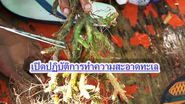 ชุมพรเปิดปฏิบัติการทำความสะอาดใต้ท้องทะเลอ่าวไทย ปกป้องปะการัง