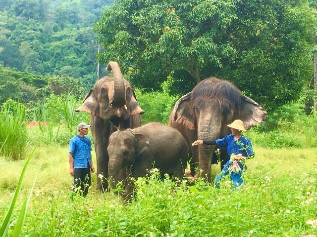 บุญมาพารวยจริง!เปิดใจเจ้าของปางช้างดังเชียงใหม่ เชื่อพระพิฆเนศวรหนุนไทยแมมมอธช่วยฝ่าวิกฤตโควิด