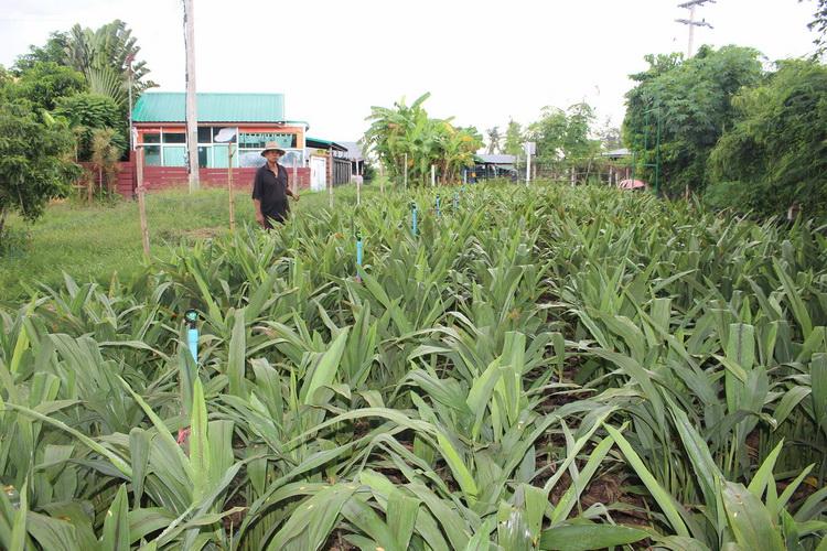 เกษตรกรเห็นด้วยเก็บสารพาราควอตมีแต่อันตราย หันมาใช้ปุ๋ยอินทรีย์แทน