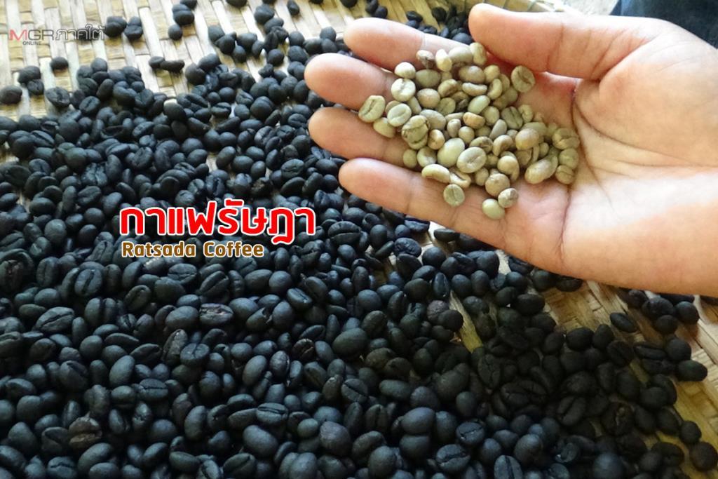 กลุ่มเกษตรกรหนองปรือ อ.รัษฎา หันปลูกกาแฟนำผลผลิตมาแปรรูป ส่งขายเป็นสินค้าขึ้นชื่อ