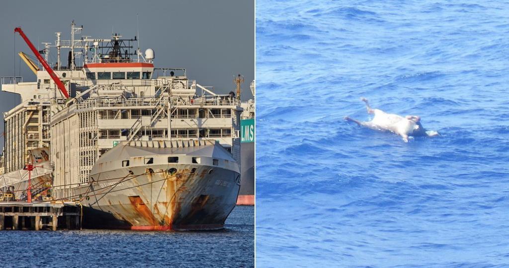 ญี่ปุ่นเผยผู้รอดชีวิตรายที่ 2 ในเหตุ 'เรือขนวัว' นิวซีแลนด์อับปางสิ้นใจแล้ว อีก 41 ชีวิตยังสูญหาย