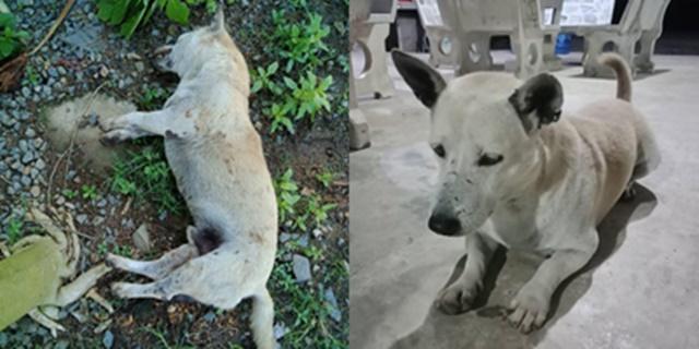 สะเทือนใจ! เจ้าของตามหาสุนัขหาย สุดท้ายพบถูกฝังในสวนเพื่อนบ้าน อ้างฆ่าเพราะกัดรองเท้า