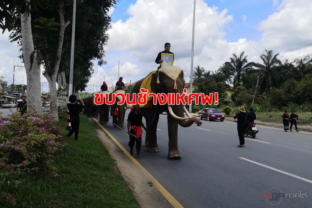 จัดใหญ่! ชาวห้วยยอดนำช้าง 4 เชือก ร่วมขบวนแห่ศพคุณตาวัย 73 ไว้อาลัยครั้งสุดท้าย