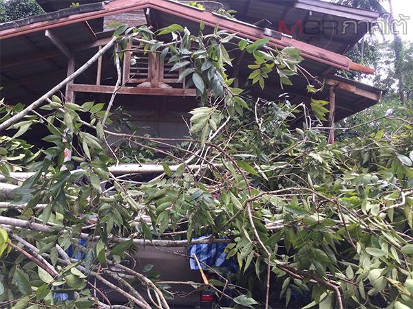 เกิดเหตุพายุพัดต้นไม้ใหญ่ล้มทับบ้านเรือนประชาชนที่พัทลุงได้รับความเสียหาย