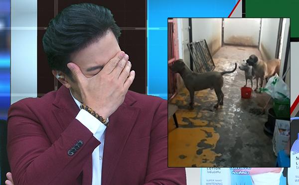 """""""หนุ่ม กรรชัย"""" มึนตี๊บ เจ้าของหมาพิทบูล 7 ตัวอ้างไม่ใช่เจ้าของหมา ลั่นเทป """"ธัญญ่า-ติ๊ก"""" ยังไม่ปวดหัวเท่านี้!"""