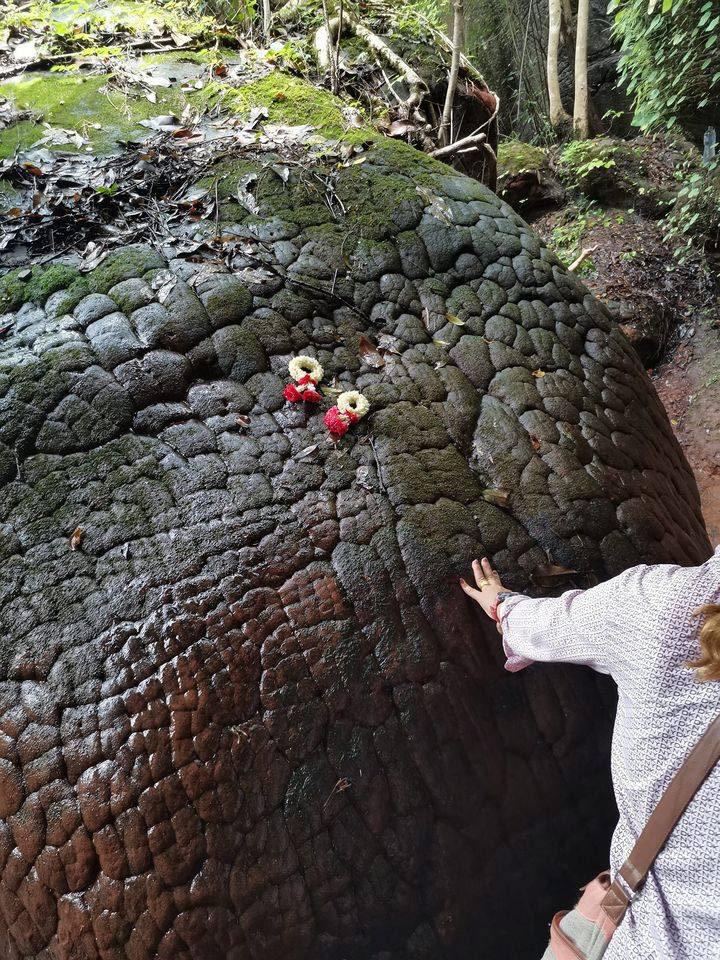 หินหัวงู ที่ถูกจับสัมผัสจากนักท่องเที่ยวเป็นจำนวนมาก (ภาพ : เพจ Buengkan day)