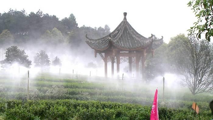 ไร่ชาในหมู่บ้านต้าอู ในตำบลหลายฟู่ เมืองอี๋ปิน มณฑลเสฉวน--แฟ้มภาพซินหัว