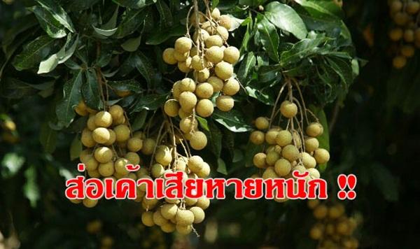 """เลื่อนลอย """"จันทบุรีโมเดล"""" รัฐบาลกัมพูชาไม่สรุปปล่อยแรงงานให้ไทยเมื่อใด"""