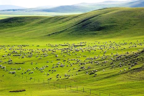 พื้นที่กว้างใหญ่ของเขตมองโกเลียใน ทางเหนือของจีน (ที่มา Sougou News)