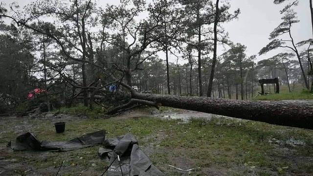 """""""พายุโนอึล"""" ทำพิษ! ฝนถล่ม-ลมซัดไม้ล้มกลางลานภูสอยดาว นักท่องเที่ยวเจ็บ 5 ต้องอพยพกันวุ่น"""